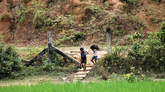 Rohingya Refugee from no man land crossed the Burma - Bangladesh border for fire woods collecting